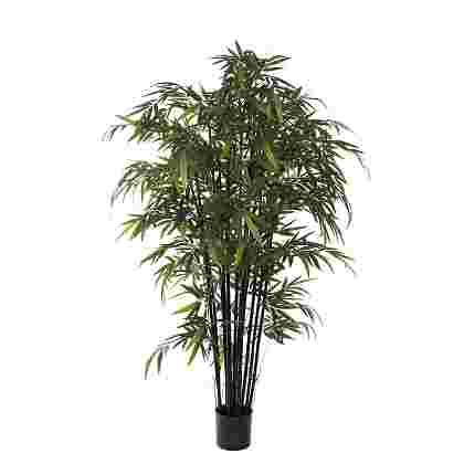 Bamboo Negro en plastico maceta  Poliester