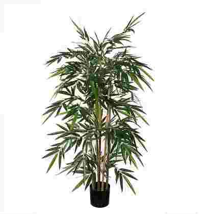 Bamboo Verde en plastico maceta  Poliester