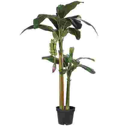 Banana tree Verde en plastico maceta  Poliester