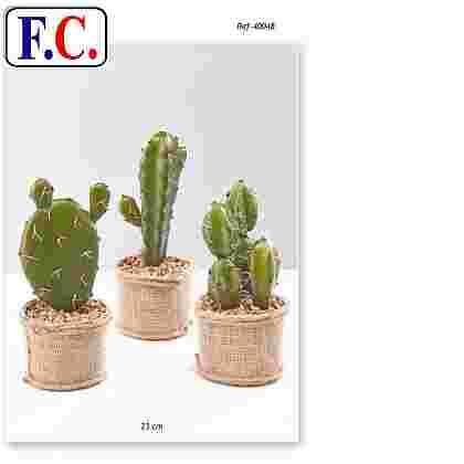 Cactus maceta saco 23 cm.