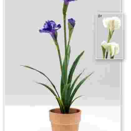 Maceta iris  60 cm.