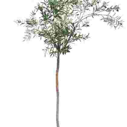 Olijfboom compact h195cm p groen