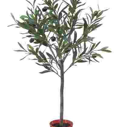 Olijfplant h55cm p groen