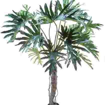 Philodendron selloum h145cm p groen