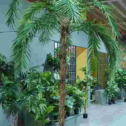 Phoenix palm h300cm p groen