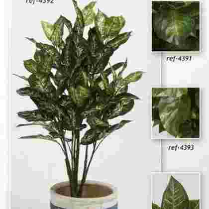 Planta dieffembachia verde multi 1.05 m.
