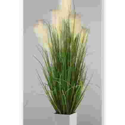 Planta hierba de la pampa en maceta 1.20
