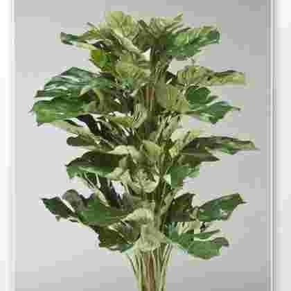 Planta split con tutor  90 cm.