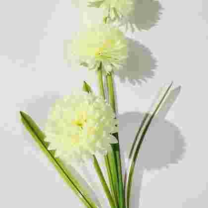 Vara crisantemo diametro cabeza 10cm