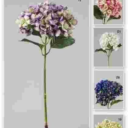 Vara hortensia garden  75 cm.
