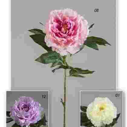 Vara peonia garden  78 cm.