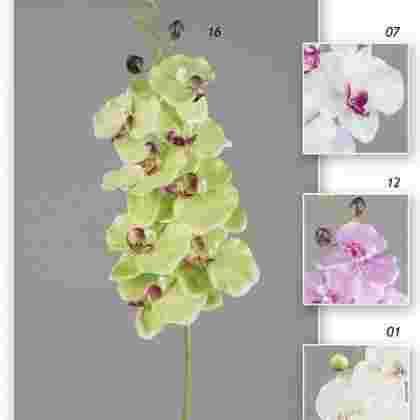 Vara phalaenopsis 95 cm